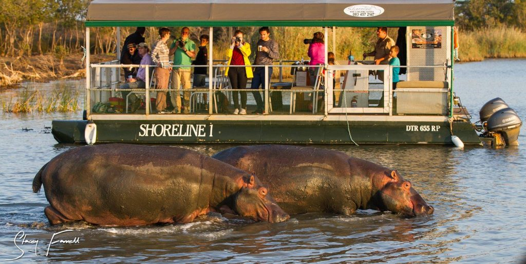 st lucia kwazulu natal south africa hippo and croc boat cruise