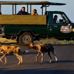 game drive safari vehicle