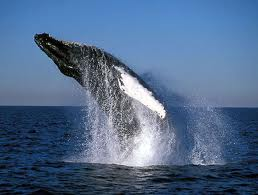 st lucia south africa whale watching