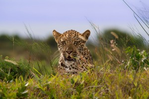 day safaris isimangaliso