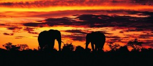 1 night Safari package