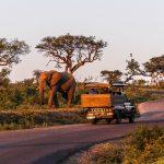 hluhluwe half day safari
