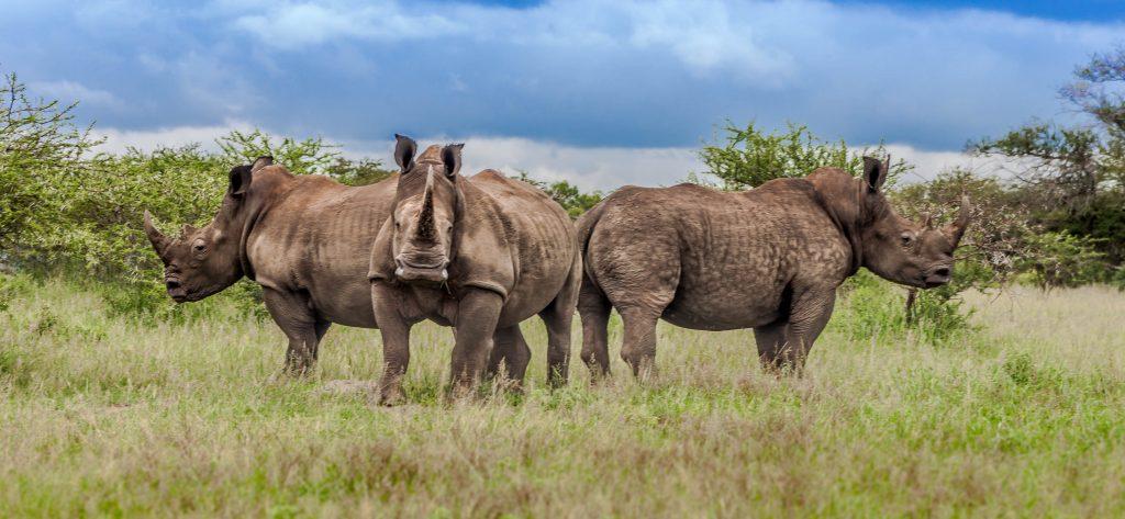 st lucia hluhluwe imfolozi safaris