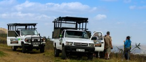 full day or half day hluhluwe safari