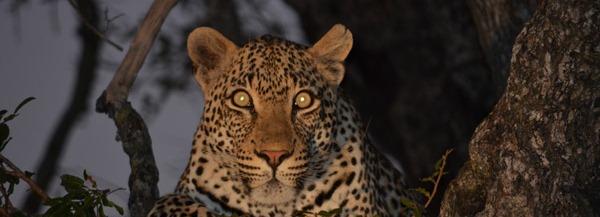 night drive safari