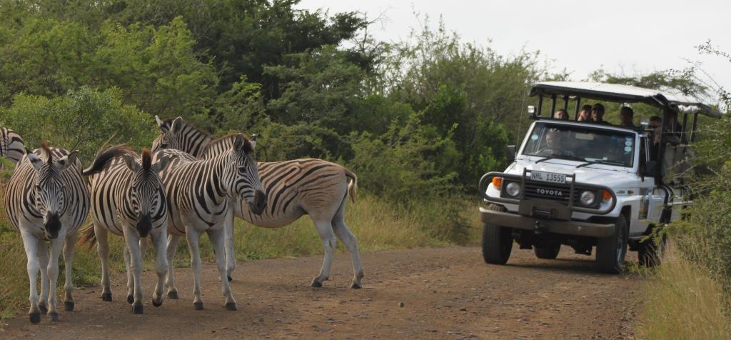 May Safari Special