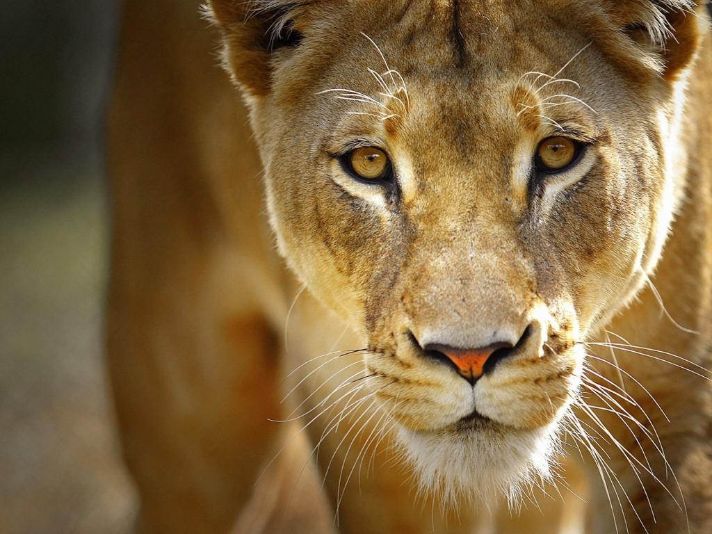 3 night safari package
