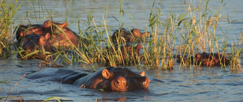 hippo & croc boat cruises