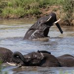st lucia boat trips elephant in estaury