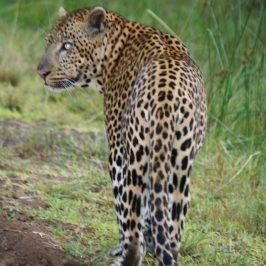 Zululand South Africa