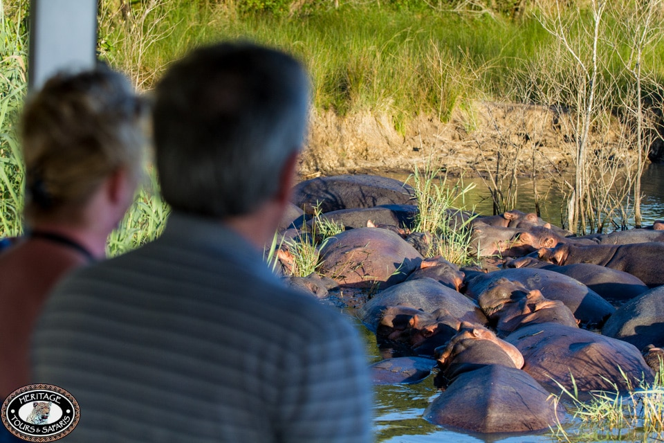 hippo pod resting
