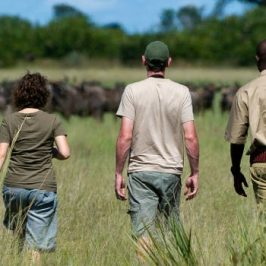 Wildlife Safaris to South Africa