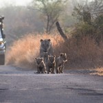 safari to africa