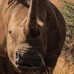 south african safari package