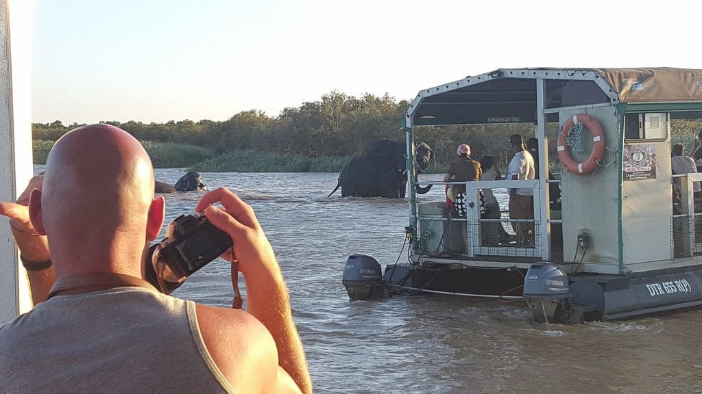 a first ever in st lucia elephants in the estuary