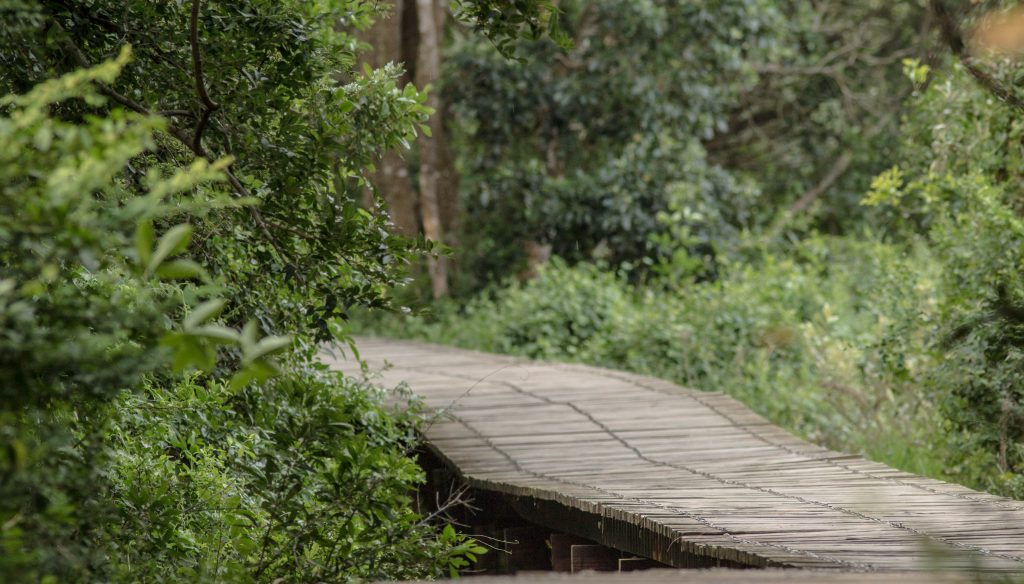 isimangaliso wetland park boardwalk