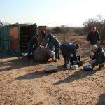 vetererian with rhino