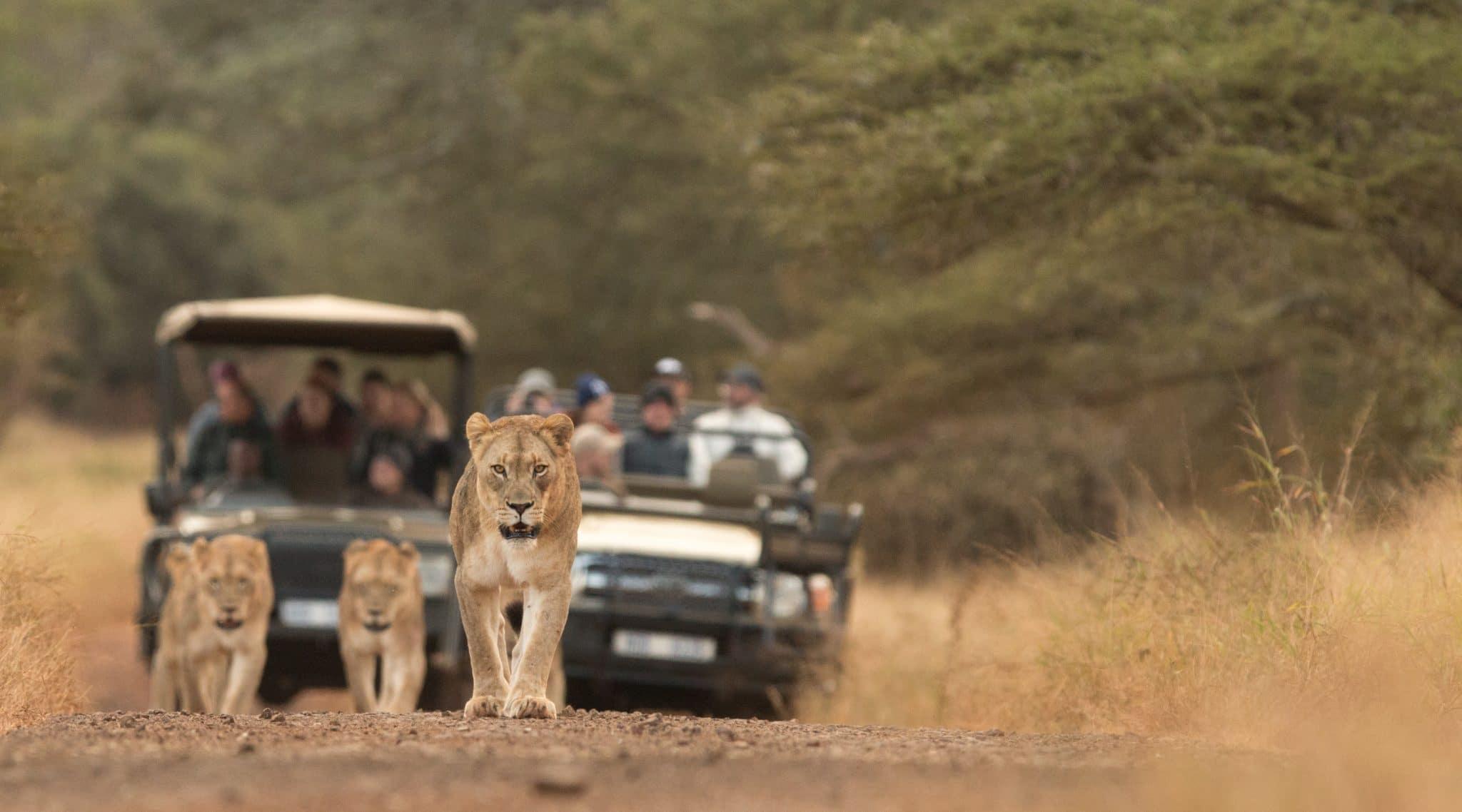 Manyoni Safari