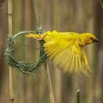 St Lucia Guided Walks and Birding Tours