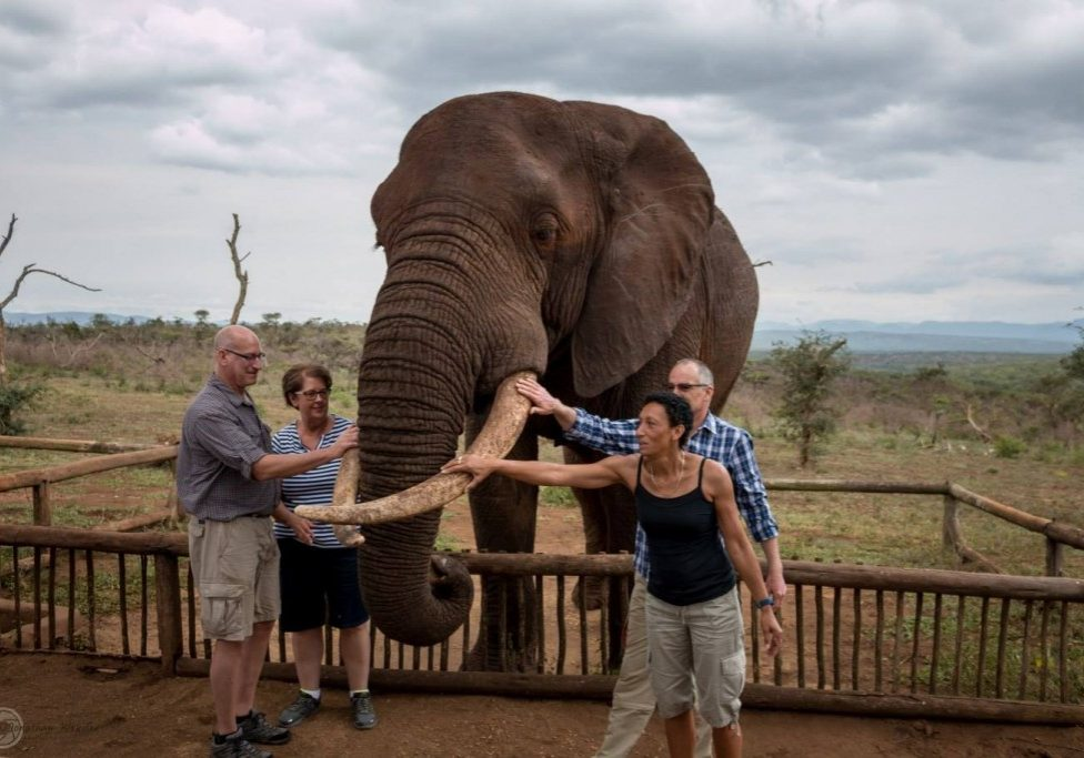 Elephant & Cheetah Interaction Package